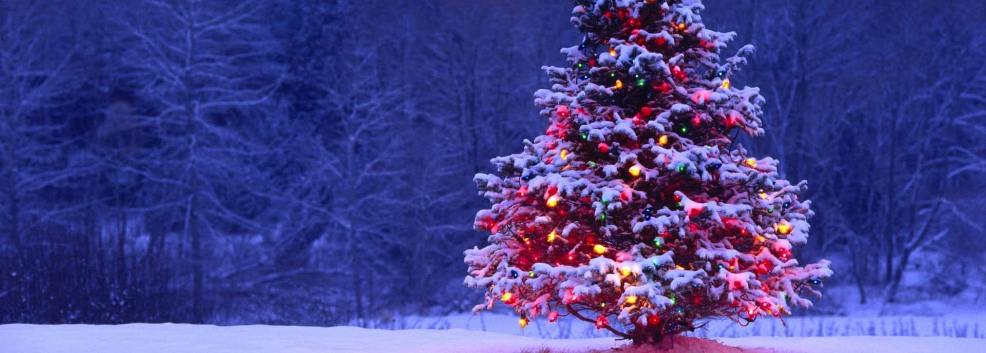 Leerlingen, docenten, solisten en ensembles van Scala presenteren een online kerstconcert vanuit Theater De Tamboer.